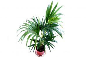 Растения-убийцы: 8 смертельно опасных растений, которые могут оказаться у вас дома